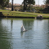 lake view with diving swan.jpg
