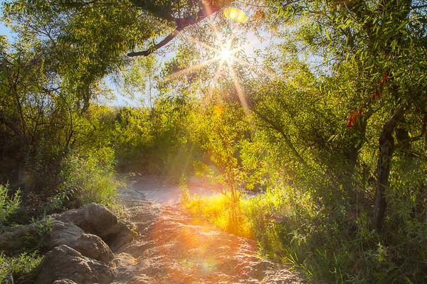 Mission Trails Regional Park Sunburst