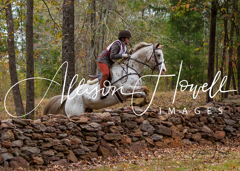 Appaloosa over stone wall2017