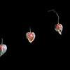 Seed Pods, Physalis Alkengi (Chinese Lanterns)