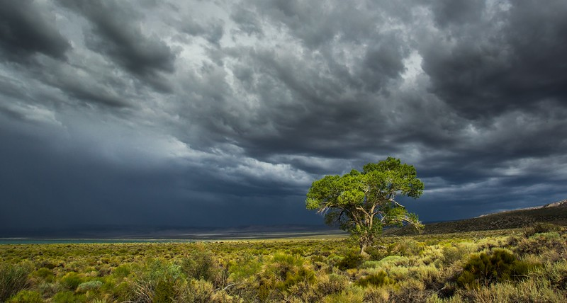 Alone In A Storm by Rinus Baak