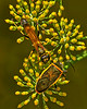 Bugs Hang Out By Joan Harris