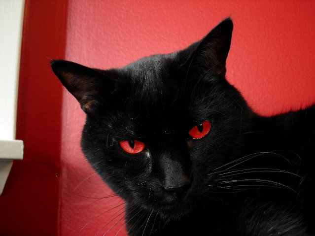 """""""Will"""" - One of our cats, Willie.  Eyes selectively coloured to match wall.  I'm now convinced he's as evil as he seems...  I think I found his true personality in this shot."""
