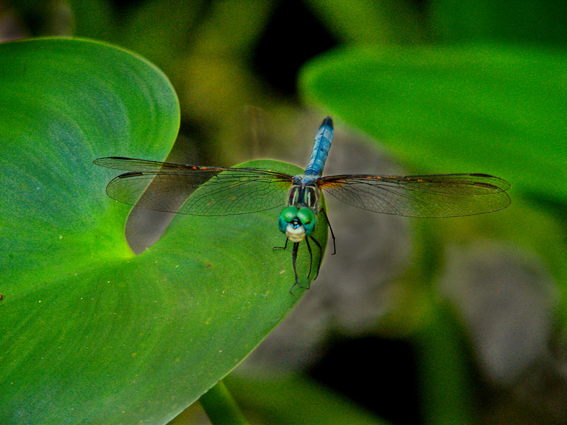 Yellow Ribbon<br /> Beginner Color Class<br /> Visiting Dragonfly<br /> Nancy Springer