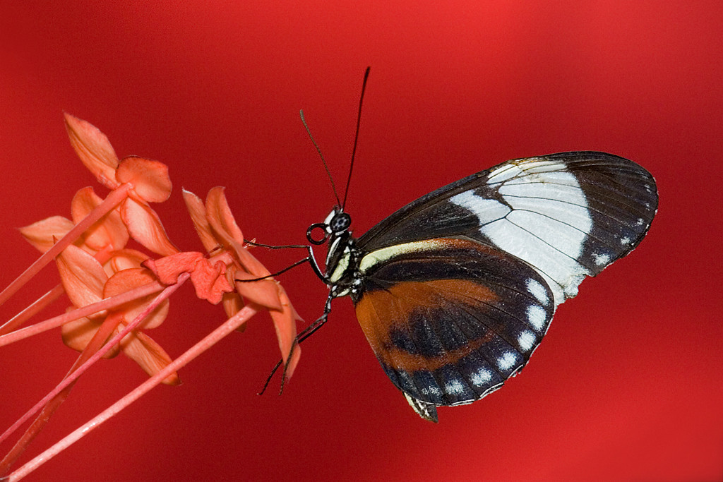 Yellow Ribbon<br /> Advanced Color Class<br /> Butterfly on Red<br /> Mike Landwehr
