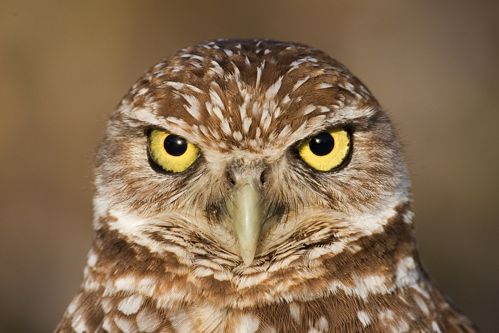 Yellow Ribbon<br /> Advanced Color Class<br /> Owl Eyes<br /> Mike Landwehr