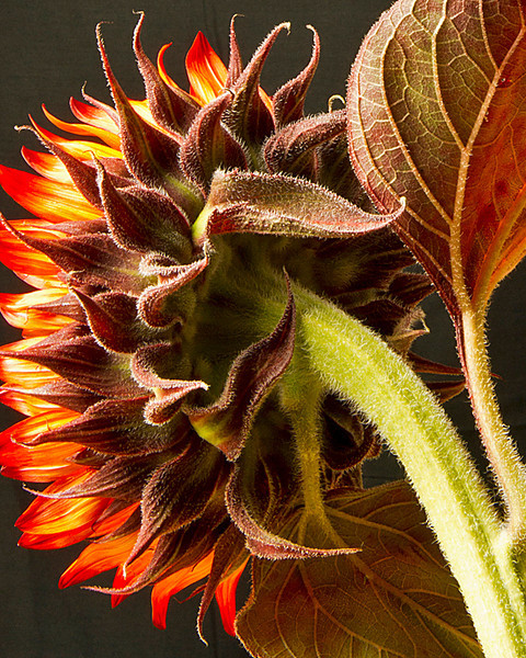 Yellow Ribbon<br /> Advanced Color Class<br /> Sunflower<br /> Carol Williamson