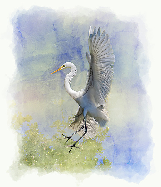 Digital Competition<br /> Yellow Ribbon<br /> Advanced Creative Class<br /> Egret Angel<br /> Nancy Springer