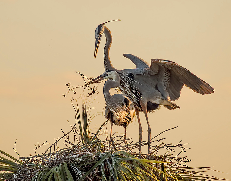 Print Competition<br /> Yellow Ribbon<br /> Advanced Color Class<br /> Nest Building Lovers<br /> Nancy Springer