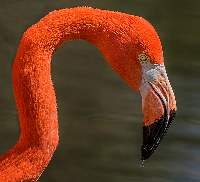 Digital Competition<br /> Yellow Ribbon<br /> Advanced Color Class<br /> Flamingo<br /> Nancy Springer