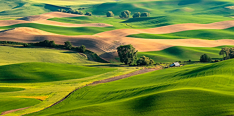 Digital Competition<br /> White Ribbon<br /> Advanced Color Class<br /> The Palouse<br /> Nancy Springer