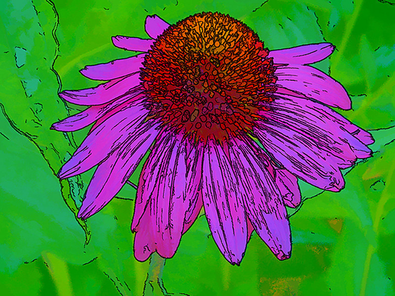 Honorable Mention<br /> Cone Flower<br /> Gail Crichton