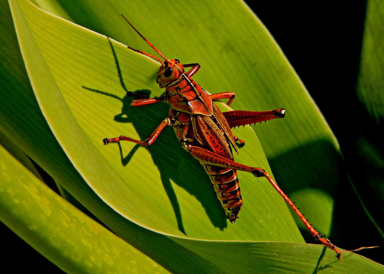First Place<br /> Grasshopper<br /> Janet Bigalke