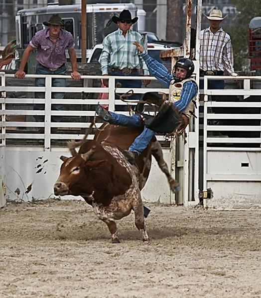 Third Place (Tie)<br /> A Lotta Bull<br /> Nancy Springer