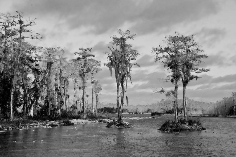 Third Place (Tie)<br /> Everglades<br /> Ed Cohen