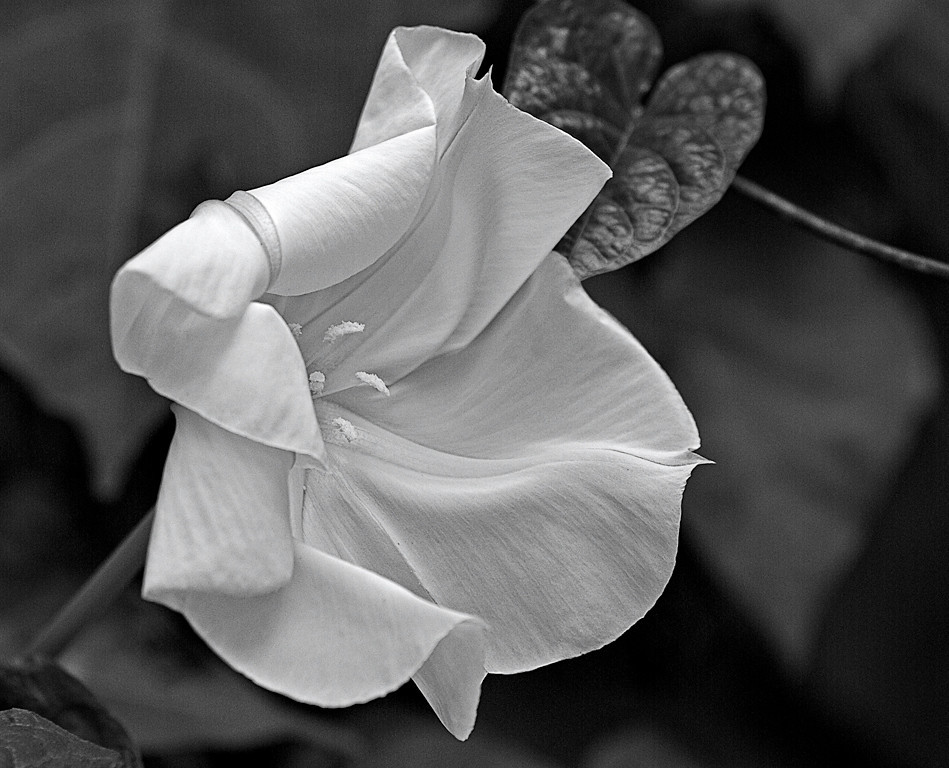 Third Place (Tie)<br /> Linen Blossom<br /> Gail Frazee