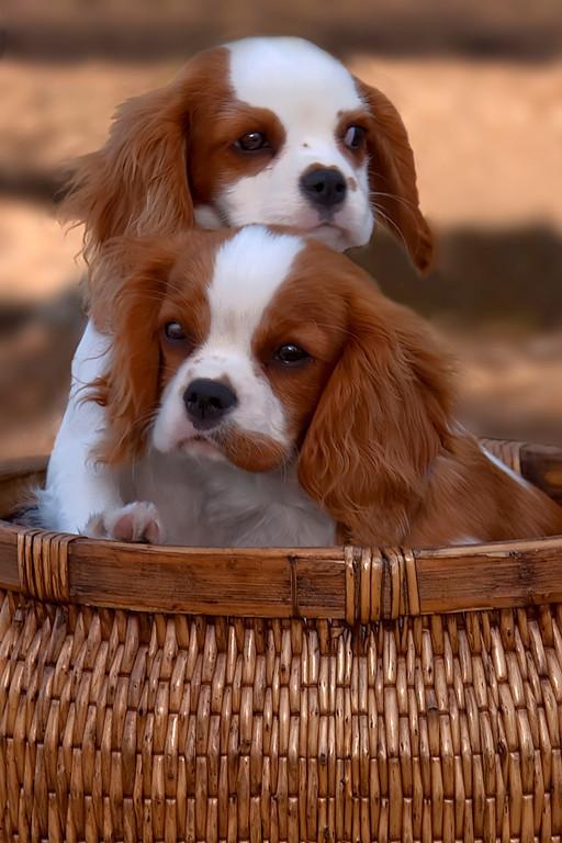 Second Place<br /> Puppy Buddies<br /> Dana Vannoy