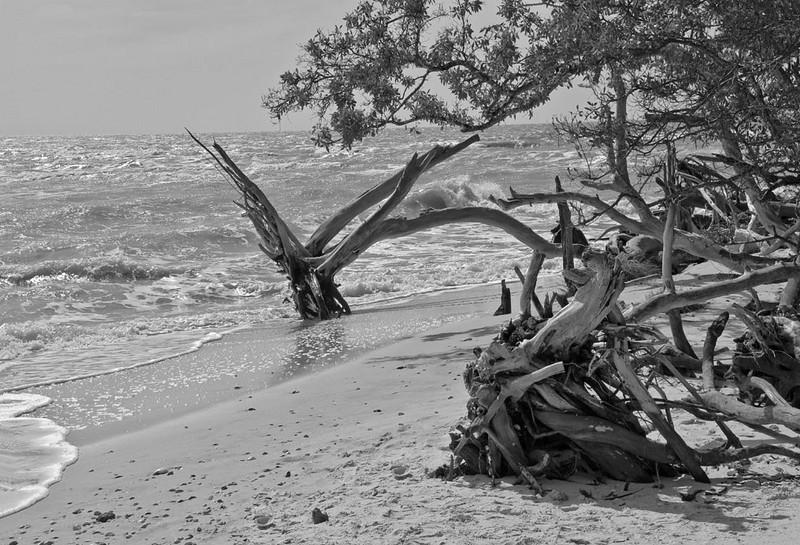 Honorable Mention<br /> Beach<br /> Dan Butchko