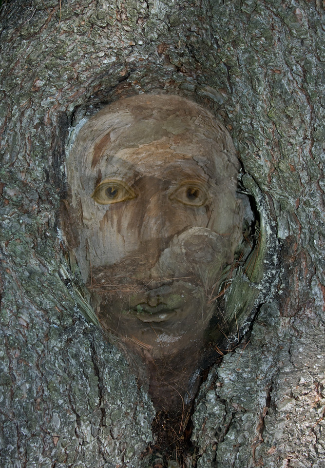 Second Place (Tie)<br /> Face in a Tree<br /> Bob Bachand
