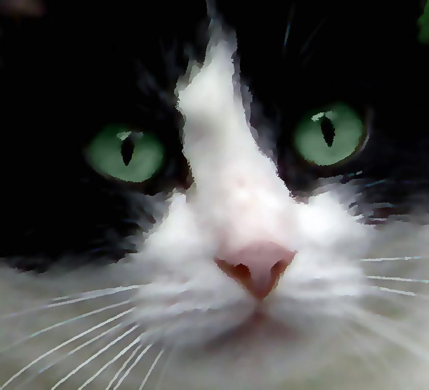 Third Place (Tie)<br /> Watercolor Cat<br /> Nancy Springer
