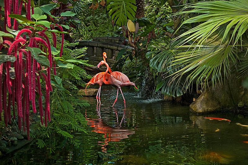 First Place<br /> Dancing Flamingos<br /> Gail Frazee
