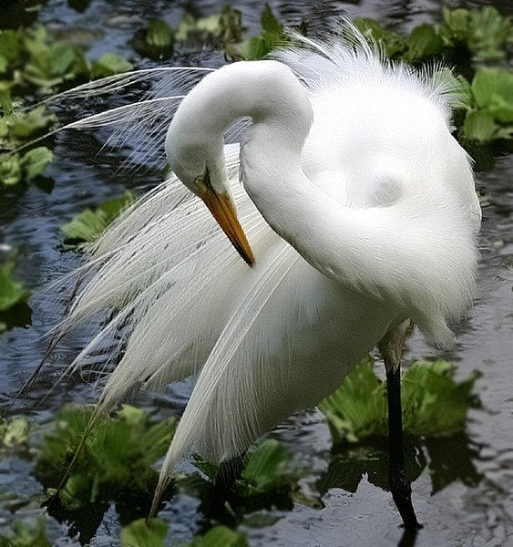 Second Place<br /> Preening Time<br /> Gail Crichton