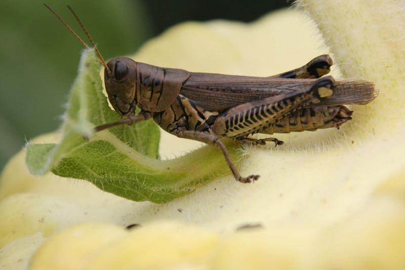 Third Place (Tie)<br /> Grasshopper<br /> Jay Feldman