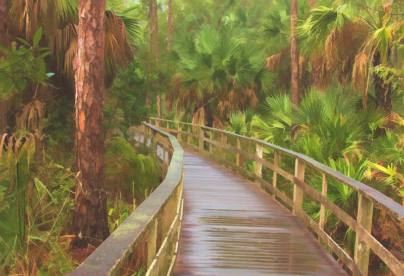 Third Place (Tie)<br /> Boardwalk Through Cypress Swamp<br /> Len Messineo