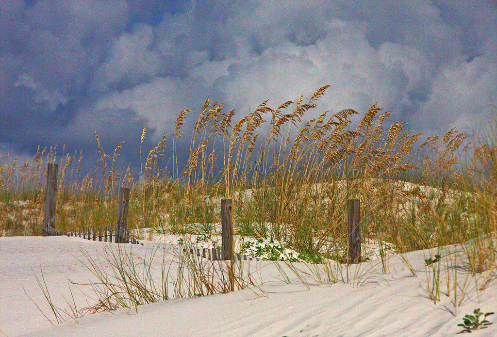 First Place (Tie)<br /> Sea Oats and Posts<br /> Len Messineo