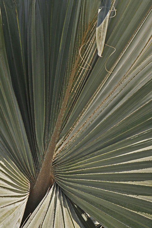 Second Place<br /> Palm Fronds<br /> Dick Walker