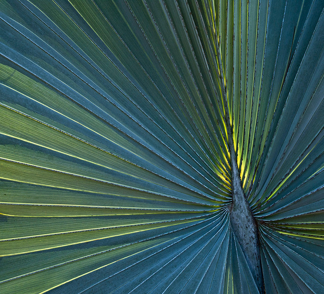 First Place<br /> Palm Fronds<br /> Nancy Springer