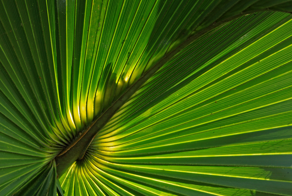 Third Place<br /> Palm Fronds<br /> Janet Bigalke