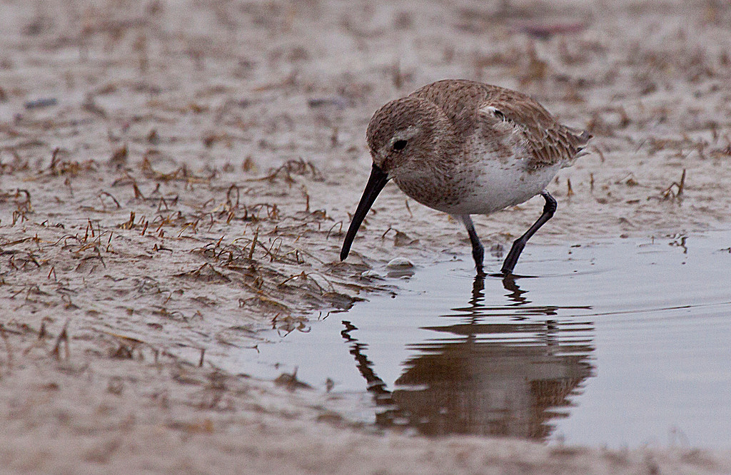 Honorable Mention<br /> Shore Birds<br /> Carol Williamson