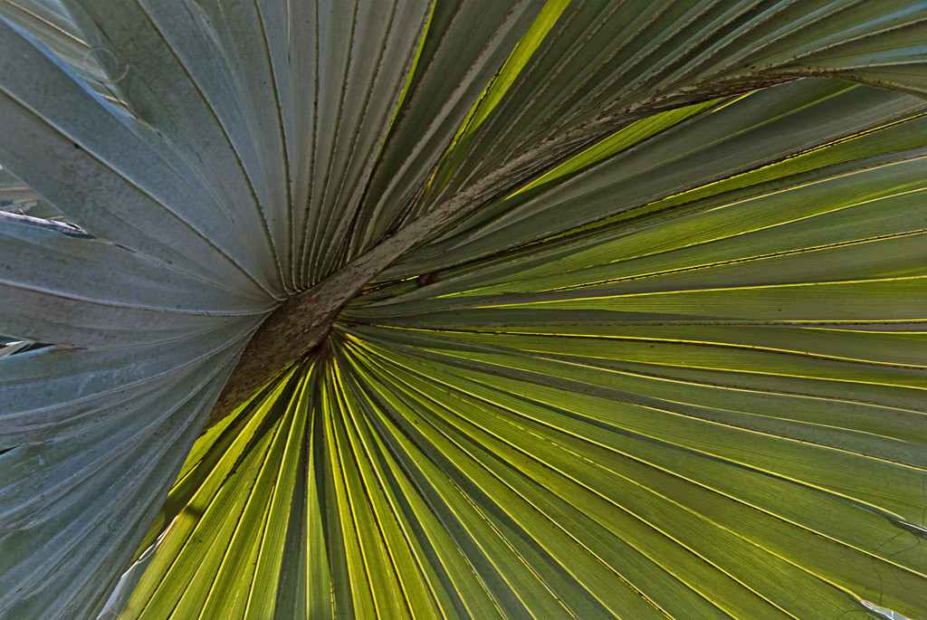 First Place<br /> Palm Fronds<br /> Gail Frazee