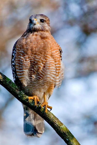 Third Place (Tie)<br /> Hawk Looking at You<br /> Dana Vannoy