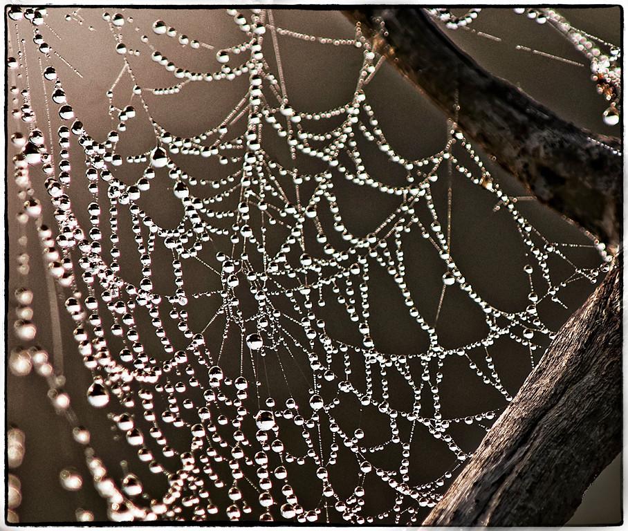 Honorable Mention<br /> Spider Web Jewels<br /> Nancy Springer