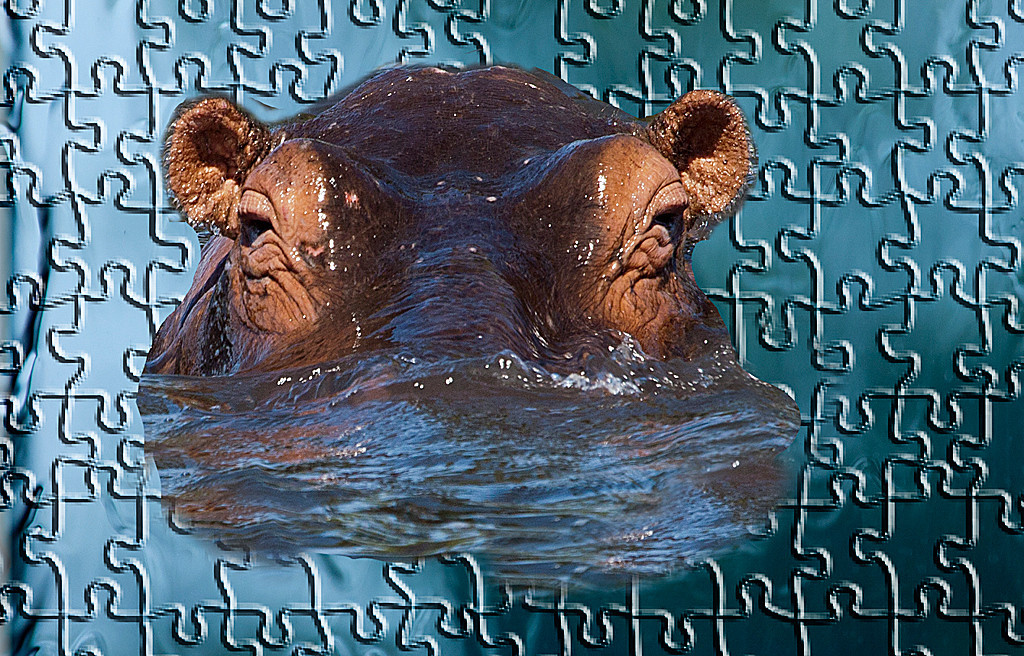 Honorable Mention<br /> Puzzled Hippo<br /> Carol Williamson