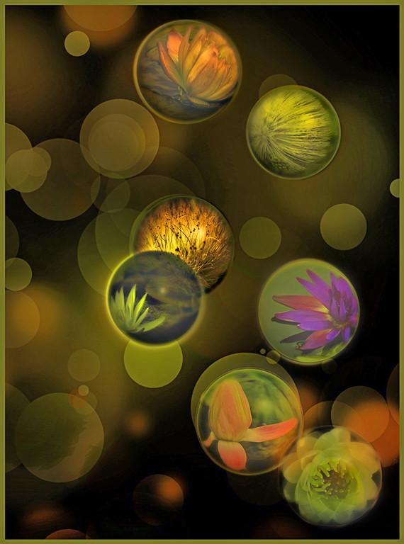 First Place (Tie)<br /> Bokeh Bubbles<br /> Nancy Springer
