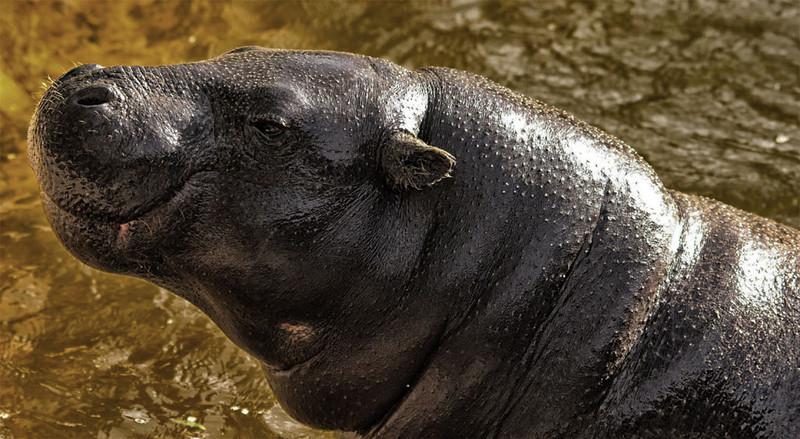 Third Place (Tie)<br /> Happy Hippo<br /> Paula Blackeby