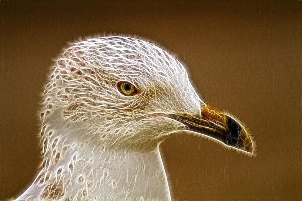 Second Place (Tie)<br /> Braided Gull<br /> Mike Landwehr