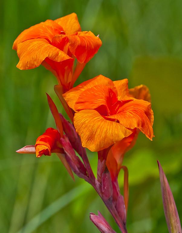 Second Place (Tie)<br /> Botanical Flower<br /> Hal Schillreff