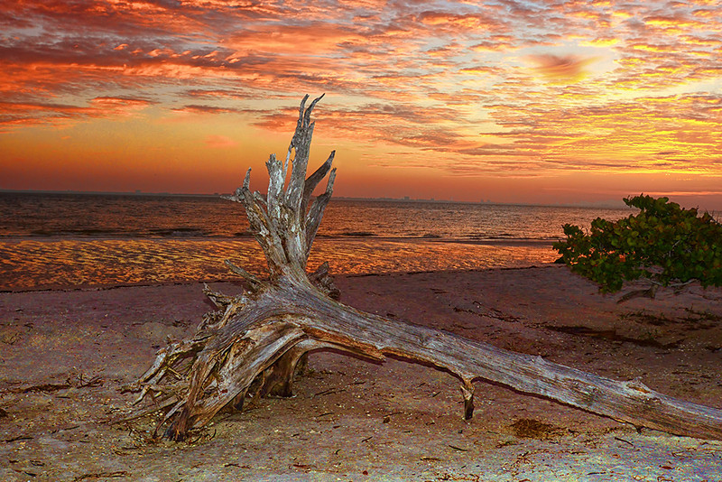 Honorable Mention<br /> Sanibel Beach Sunrise<br /> Ed Cohen