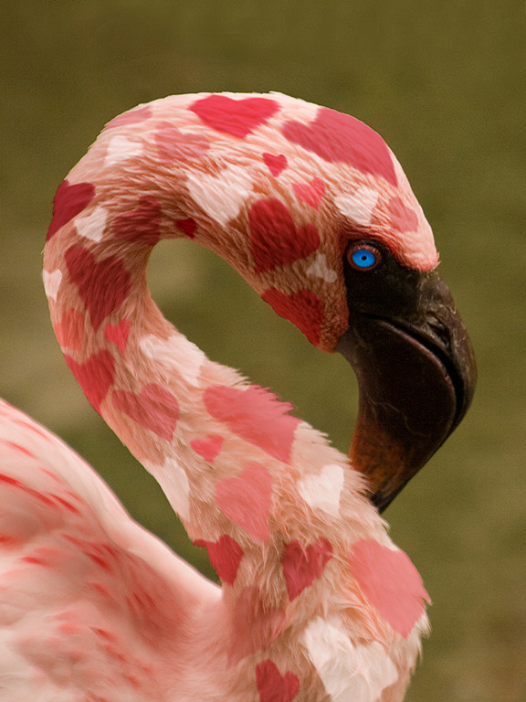 Third Place (Tie)<br /> Valentine Flamingo<br /> Carol Williamson