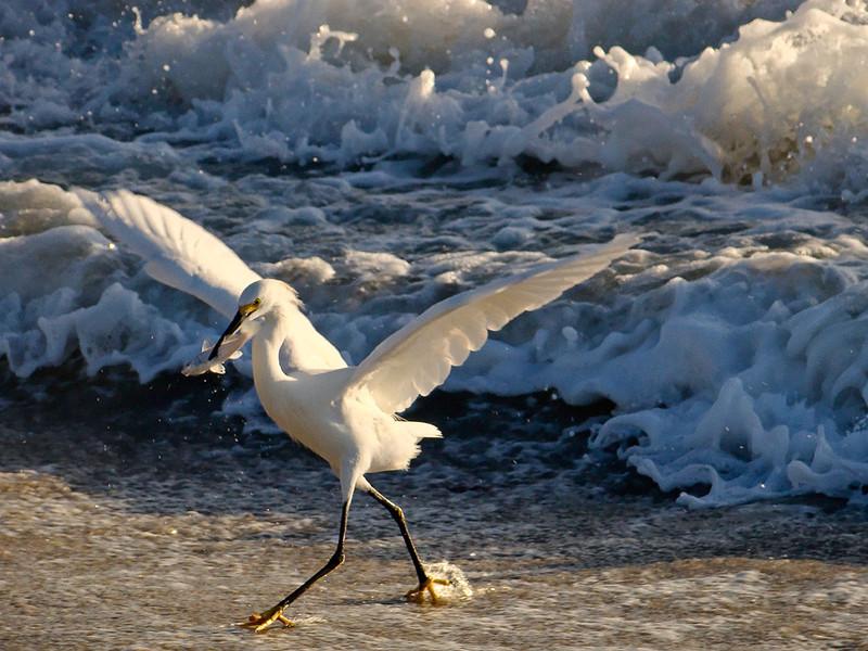Second Place<br /> Fishing Bird<br /> Katie Mazer