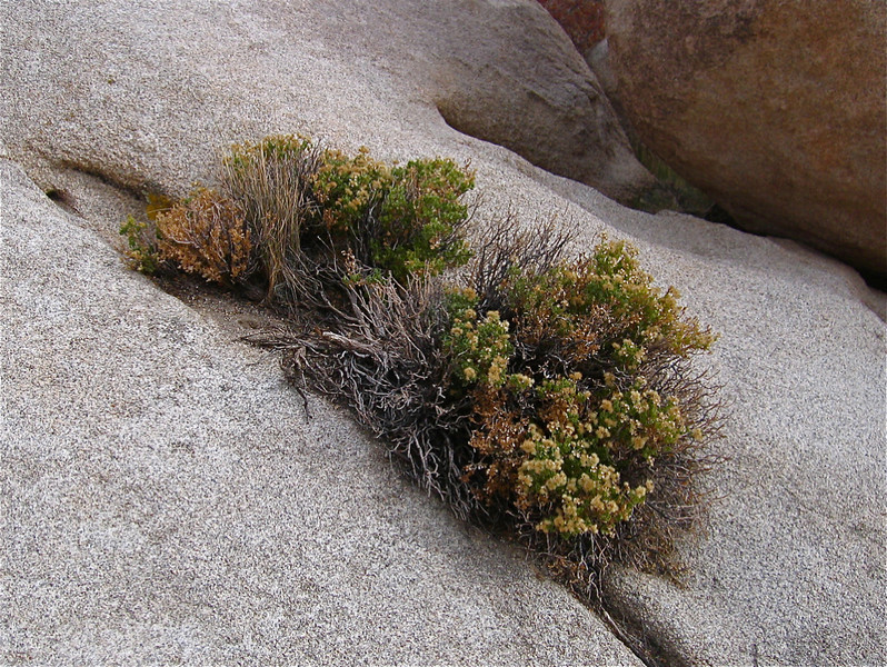 Second Place (Tie)<br /> Joshua Tree National Park<br /> Angie Hill