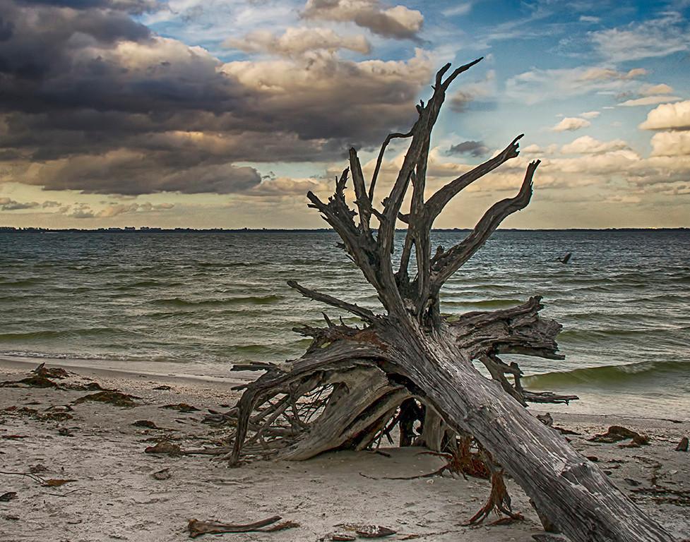 Honorable Mention<br /> Sanibel Beach<br /> Nancy Springer