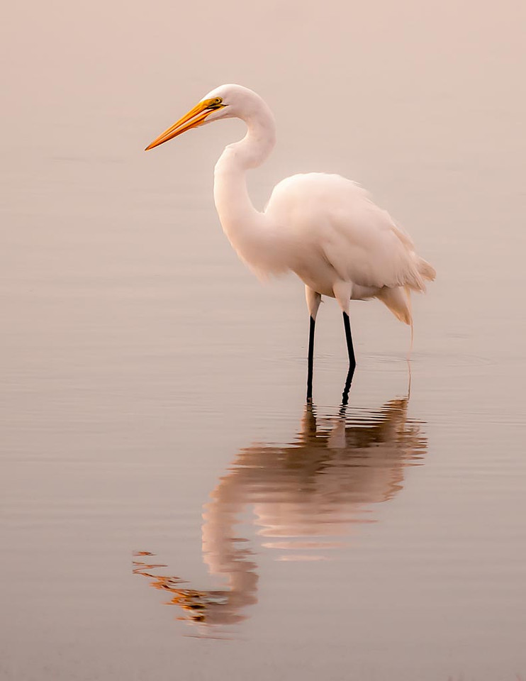 First Place (Tie)<br /> Egret Reflection<br /> Kathy Snead