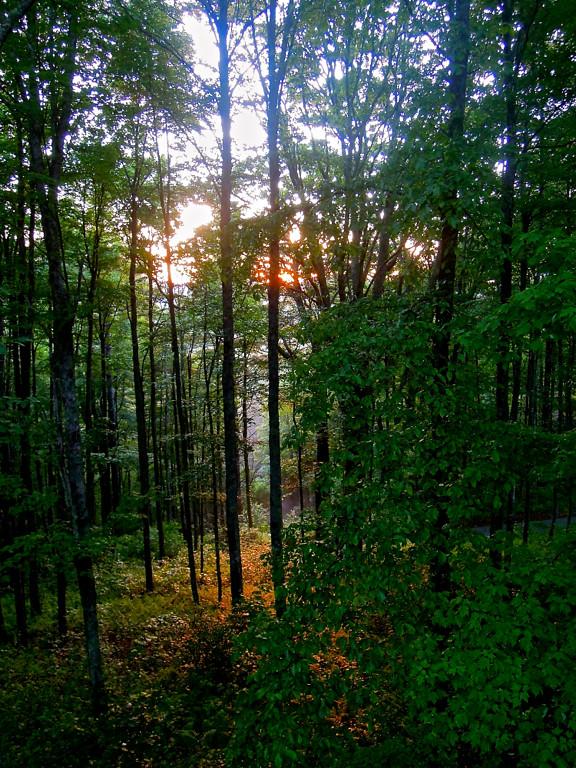 Angie Hill, Nantahala Nat. Forest at Dawn, Open Trees