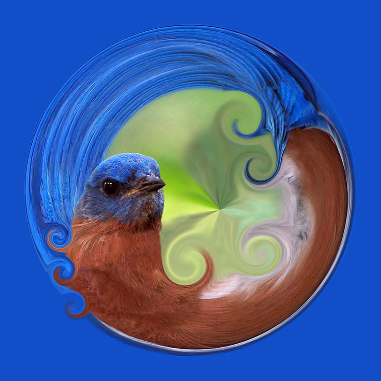 Fanciful Bluebird