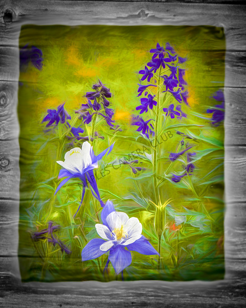 Creative Print Image of the Year<br /> Wild Flowers<br /> Dave Garrison